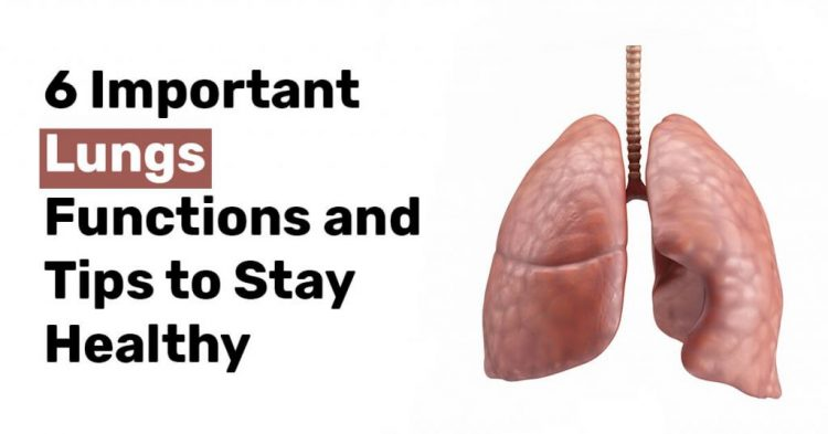 6 Important Lungs Functions and Tips to Stay Healthy