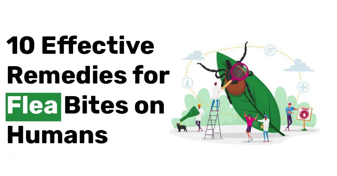 10 Effective Remedies for Flea Bites on Humans