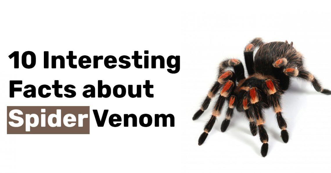 10 Interesting Facts about Spider Venom