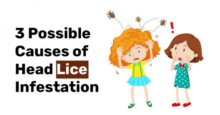3 Possible Causes of Head Lice Infestation