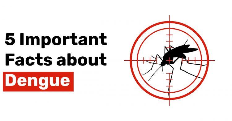 5 Important Facts about Dengue
