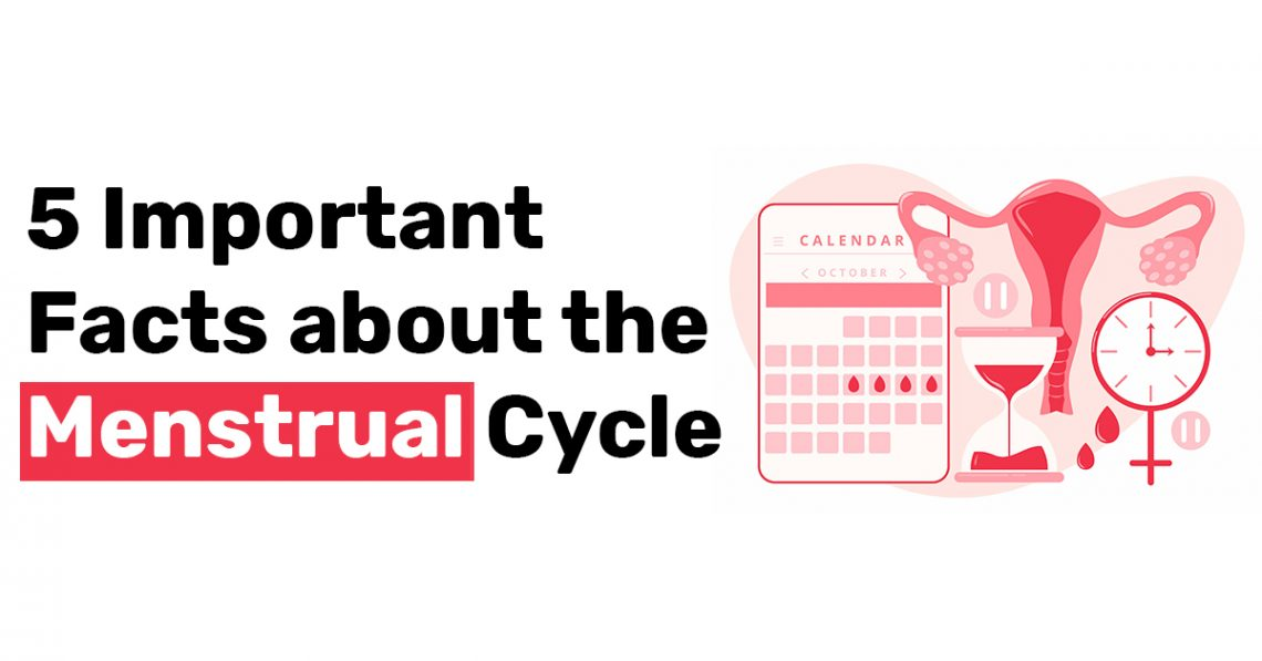 5 Important Facts about the Menstrual Cycle