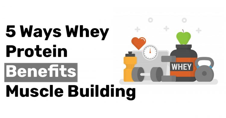 5 Ways Whey Protein Benefits Muscle Building