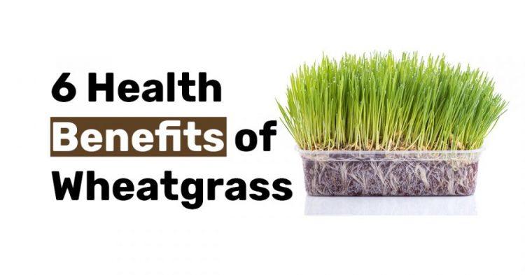 6 Health Benefits of Wheatgrass