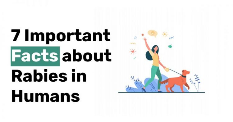 7 Important Facts about Rabies in Humans