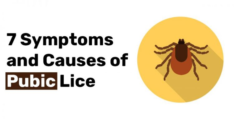 7 Symptoms and Causes of Pubic Lice