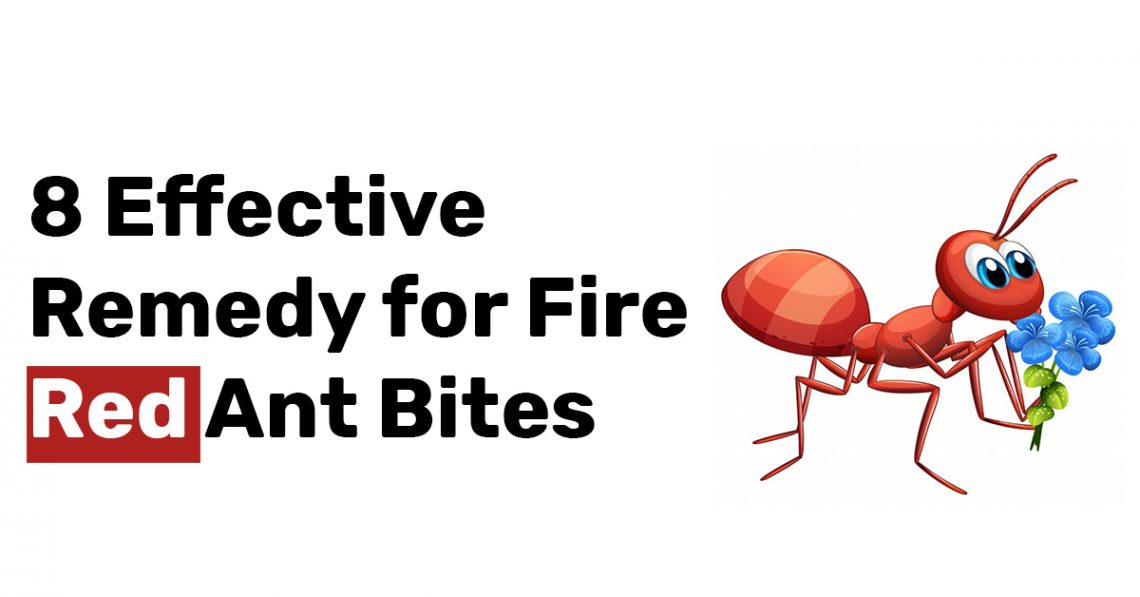 8 Effective Remedy for Fire Red Ant Bites