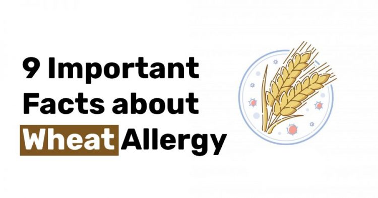 9 Important Facts about Wheat Allergy