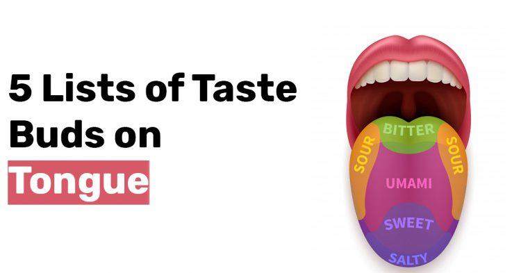5 Lists of Taste Buds on Tongue