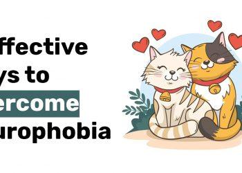 6 Effective Ways to Overcome Ailurophobia