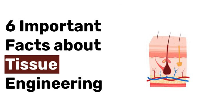 6 Important Facts about Tissue Engineering