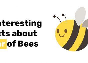 6 Interesting Facts about Fear of Bees