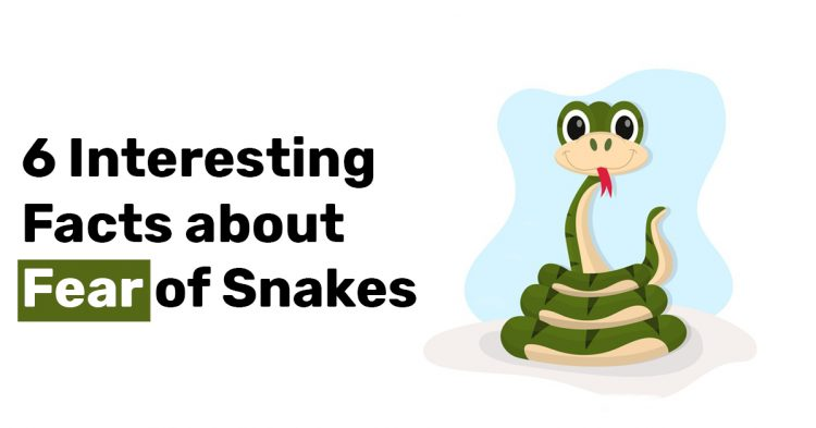 6 Interesting Facts about Fear of Snakes