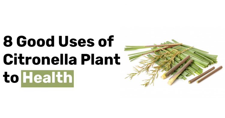 8 Good Uses of Citronella Plant to Health