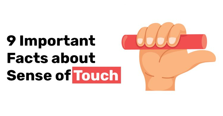 9 Important Facts about Sense of Touch